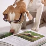 éducation canine à domicile : un chien lit un livre