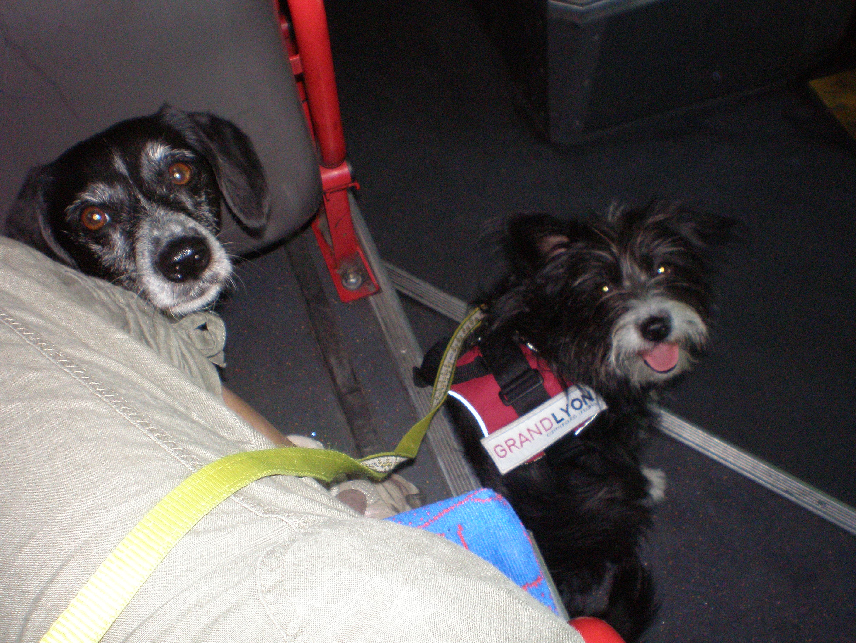 Pampa et Yéti dans le bus