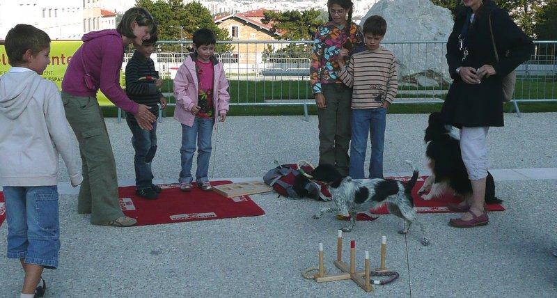 Pampa aux chiens visiteurs