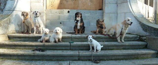Plusieurs chiens assis