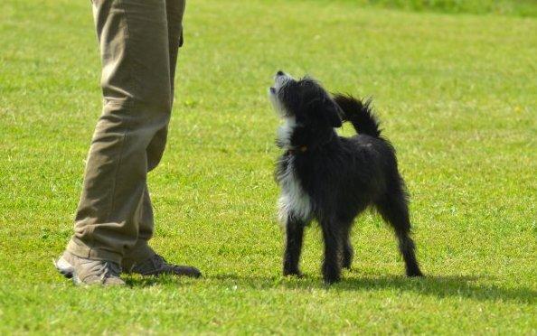 chien debout regarde son maître