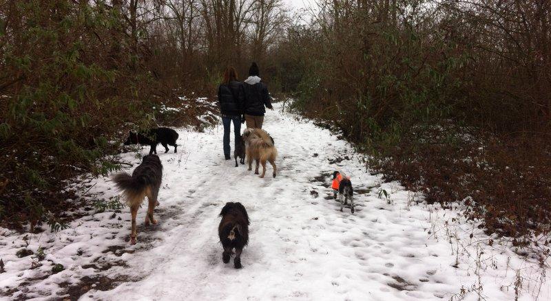 les chiens dans la neige
