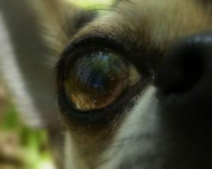 Le monde dans l'œil d'un chien...