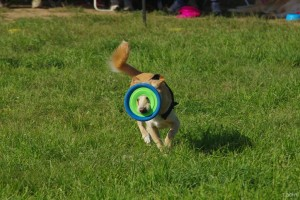 Spliff et son premier frisbee