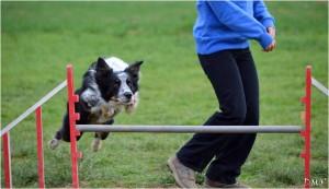 Les sauts nécessitent de la puissance, de la coordination et une excellente musculature pour préserver les articulations.