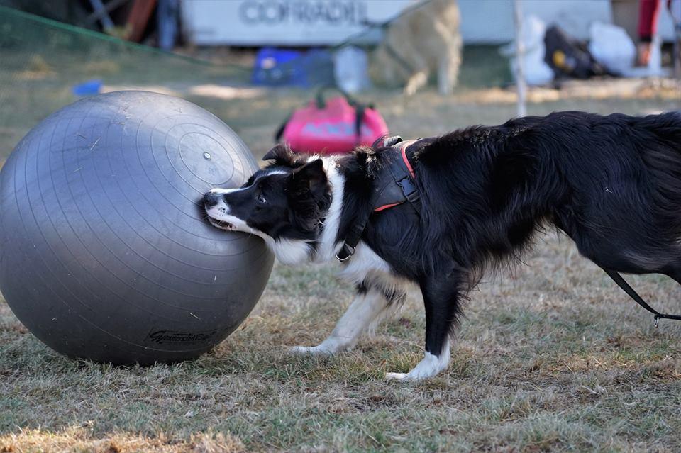 Inouk apprend à pousser le ballon
