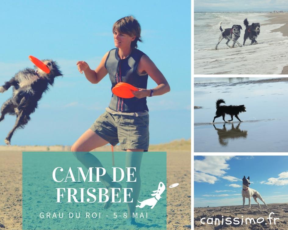 Camp de frisbee (1)