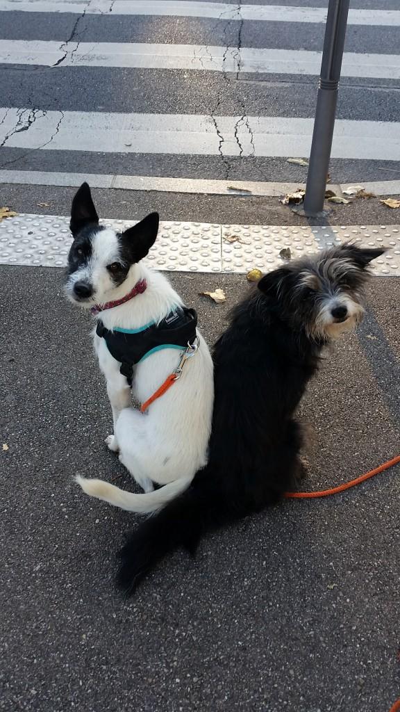 Yopp et Yéti attendent l'autorisation de traverser