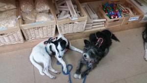 Yéti et Yopp (1 an) attendent dans un magasin